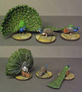 FOI 101 Peacock